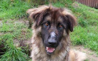 Tierfreunde Münster Hunde